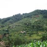 Agroforestry plots