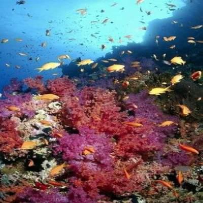 Coral Reef Sharm El Sheikh Notenoughgood Com